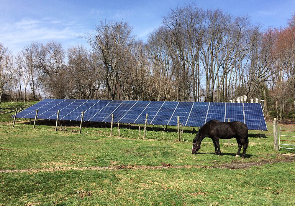 Horse standing in a field in front of ground-mounted solar panels with trees in the background